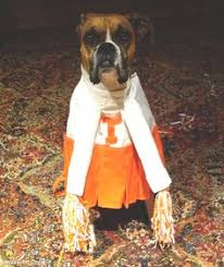 Boxer Puppy Halloween Costumes Lady Dog Costume Cute Animals Halloween Crafts Diy Costumes