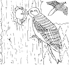 wildlife coloring book clipart coloring book woodpecker