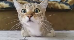 Cats In Small Spaces Video - watch a cat watching a horror movie the ark in space