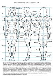 Female Body Anatomy Drawing 8 Best Female Anatomy Images On Pinterest Drawing Sketches And