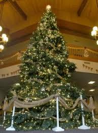 large christmas premium large live christmas trees custom order