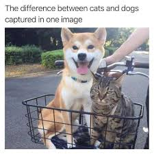Cat And Dog Memes - dopl3r com memes the difference between cats and dogs captured