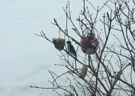 tallow bird seed ornaments