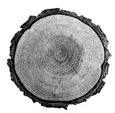 useful tree species for tree ring dating