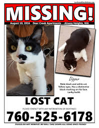 Missing Cat Meme - missing cat airway heights wa lost found pets wa state