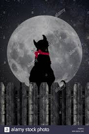 black cat sitting on wood fence staring at a moon stock photo
