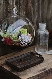 amazon com hanging globe glass terrarium indoor succulent