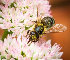 the urban apiarist backyard beekeeping
