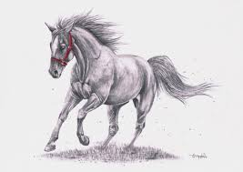 pencil drawing horse sketch horse on white background detailed