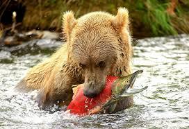 imagenes de animales carnivoros para imprimir tipos de animales