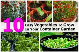 How To Grow Vegetables by 10 Easy Vegetables To Grow In Your Container Garden
