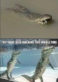 Crocodile Meme - the best crocodile memes memedroid