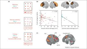 prefrontal u2013parietal function foraging foresight trends