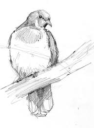 5 steps bird drawing u2013 drawing motmot