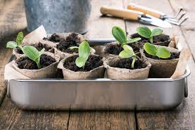 6 simple steps to grow plants from seed earl may
