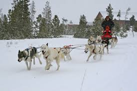 dog sledding snow mountain ranch winter park co