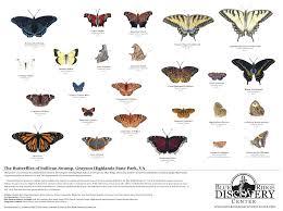 Grayson Highlands State Park Map by Butterflies Of Sullivan Swamp Grayson Highlands State Park U2014 Blue