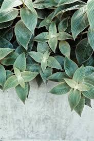 102 best plants belles plantes images on pinterest plants