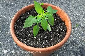 how to make potting soil for container gardening with recipe