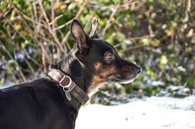 Buster Comfort Collar How To Choose The Right Training Collar Or Harness For Your Dog