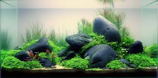 black river rock aquarium aquaria u0026 aquascapes pinterest