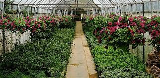 Nursery Plant Supplies by U U0026 D Trucking U0026 Nursery Inc Nursery U0026 Landscape Supplies