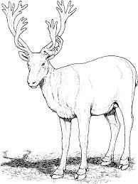 deer coloring pages download print deer coloring pages