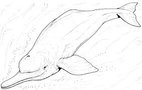 extraordinary cute dolphin coloring pages affordable