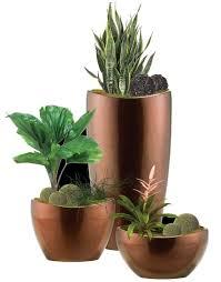 floor plant whats new