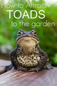 How To Get Rid Of Cane Toads In Backyard How To Attract Frogs And Toads To Your Garden Insects Frogs And