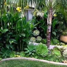 Garden Landscape Design by 14 Tropical Plants To Create A Tropical Garden In Cold Climate