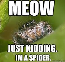 Spider Meme Misunderstood Spider Meme - image 325848 misunderstood spider know your meme