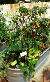 indoor vegetable gardening for beginners home outdoor decoration 25 best container vegetable gardening ideas on pinterest metal trough used as container for vegetable garden cucumbers tomato herbs