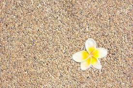 pebble textured wall with frangipani tile for fine background