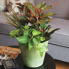 self watering self watering containers for indoors or out