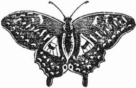 butterfly black and white drawing reusableart com