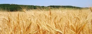chambre agriculture herault agriculteurs en difficulté chambres d agriculture