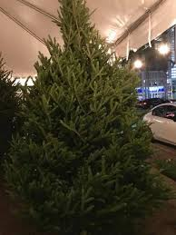 christmas tree sale brickell christmas tree sale home