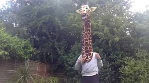 Giraffe Hat Meme - for all the lonely giraffes out there youtube