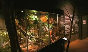 reptile terrariums google search reptile terrarium inspiration