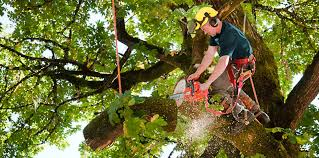 why emergency tree removal service is better than diy in york pa