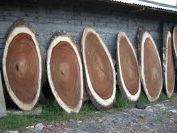 Vivarium Wood Decor The World U0027s Best Photos Of Rainforest And Vivarium Flickr Hive Mind