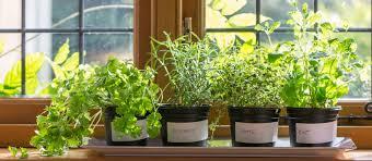 fűszernövények dekoráció és konyhai kiegészítő http www