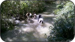 australian shepherd water dog trainer u0027s photo gallery