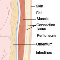 Anatomy Of Stomach And Intestines Anatomy Of The Abdomen And Groin Sterling Care