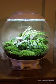 a long term review of the biorbair terrarium