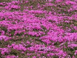 Flowers Of The Month List - flowers in japan