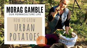 how make self watering pots morag gamble our permaculture how grow urban potatoes morag gamble our permaculture life