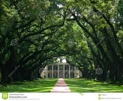 oak alley stock photography image 1583912