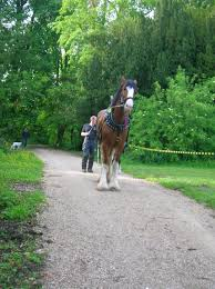 file horse logging clydesdale horse jpg wikimedia commons